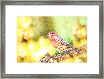 Male House Finch - Digital Paint Framed Print by Debbie Portwood