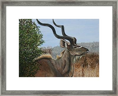 Male Kudu Antelope Framed Print