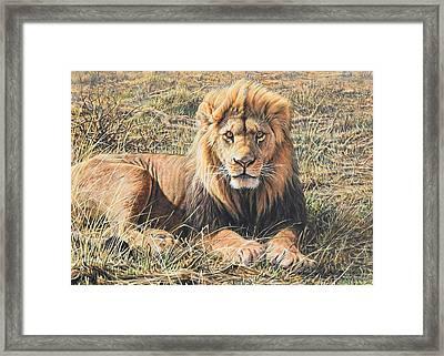 Male Lion Portrait Framed Print