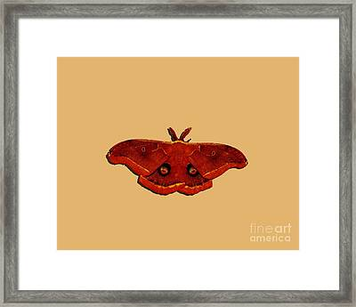 Framed Print featuring the photograph Male Moth Red .png by Al Powell Photography USA