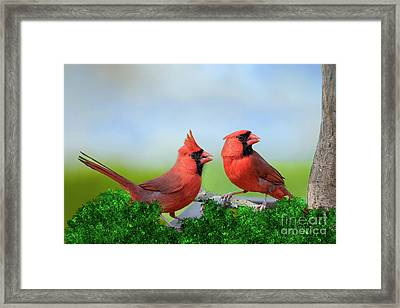 Framed Print featuring the photograph Male Northern Cardinals In Spring by Bonnie Barry