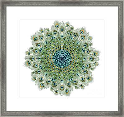 Male Peacock Colorful Mandala Framed Print by Gazanfer Gungor