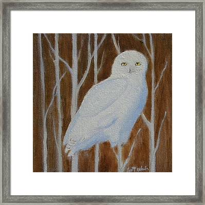 Male Snowy Owl Portrait Framed Print