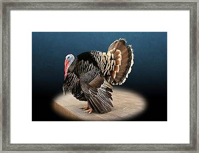 Male Turkey Strutting Framed Print