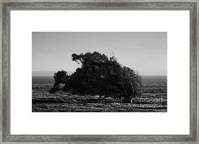 Framed Print featuring the photograph Malformed Treeline by Clayton Bruster