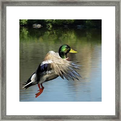Mallard Digital Freehand Painting 2 Framed Print by Ernie Echols