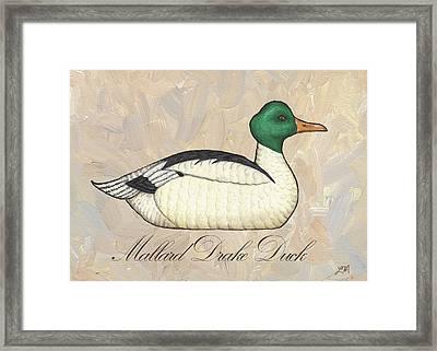 Mallard Drake Duck Framed Print by Linda Mears