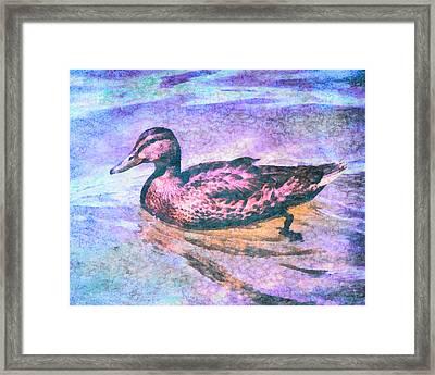 Mallard Duck Art Framed Print