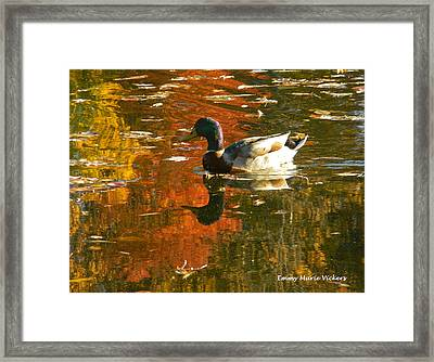 Mallard Duck In The Fall Framed Print
