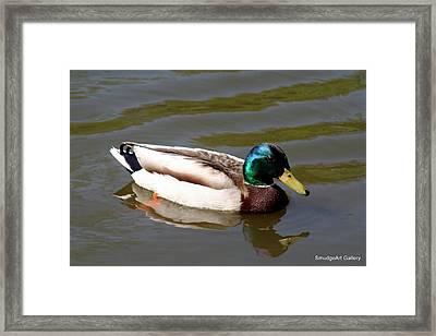 Mallard Duck Framed Print by Madeline  Allen - SmudgeArt