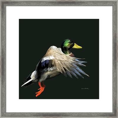 Mallard Freehand Framed Print by Ernie Echols