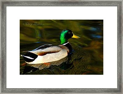 Mallard Green Framed Print by Clayton Bruster