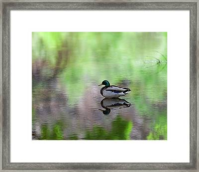 Framed Print featuring the photograph Mallard In Reflecting Pool H58 by Mark Myhaver