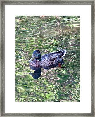 Mallard Monet Framed Print