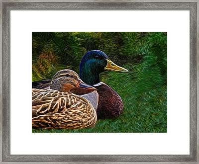 Mallard Pair Digital Art Framed Print