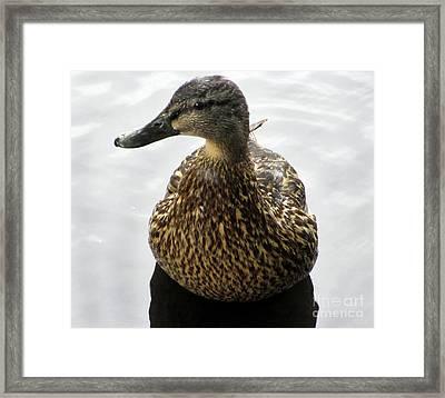 Mallard Profile Framed Print