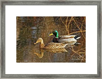 Mallard Spring Pair Framed Print by Natural Focal Point Photography