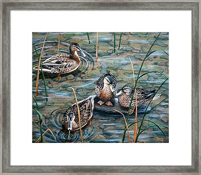 Mallards Framed Print by Brenda Baker