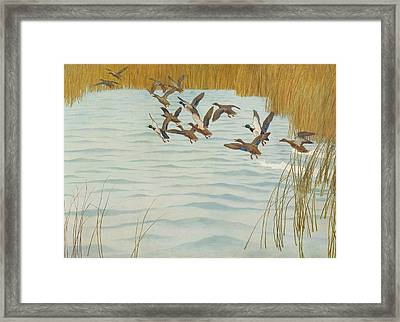 Mallards In Autumn Framed Print by Newell Convers Wyeth