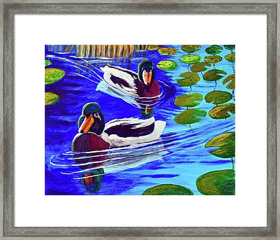 Mallards In The Pads Framed Print by Bob Crawford