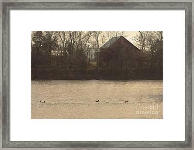 Mallards On The Lake Framed Print