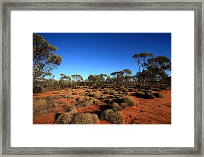 Mallee And Spinifex Framed Print by Tony Brown