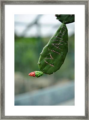 Mallika Framed Print by Jessica Rose
