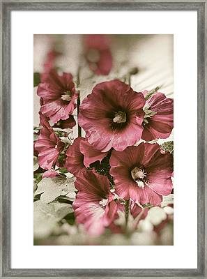 Framed Print featuring the photograph Mallows. Horytsya, 2014. by Andriy Maykovskyi