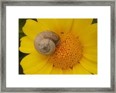Malta Flower Framed Print