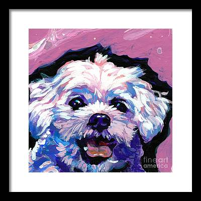 Shih Tzu Framed Prints