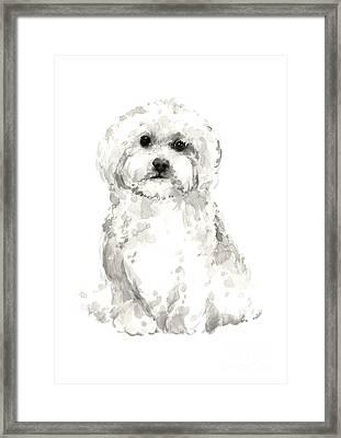 Maltese Abstract Dog Poster Framed Print