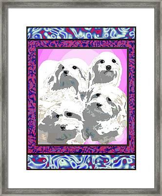 Maltese Group Framed Print by Kathleen Sepulveda