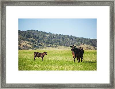 Mama And Her Calf Framed Print by Todd Klassy