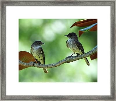 Mama And Papa Kingbird Framed Print