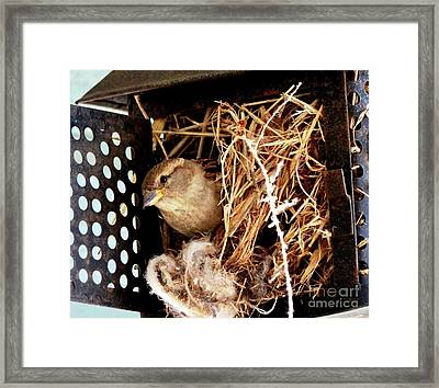 Mama Bird Framed Print
