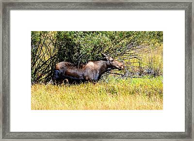 Mama Moose Framed Print by Jaunine Roberts