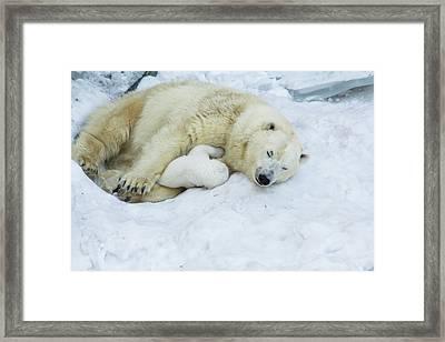 Mama Polar Bear With Her Child. Framed Print by Andrey Tsvirenko