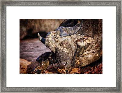 Mama Said There'd Be Days Like This Framed Print