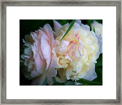 Mama's Blushing Peonies Framed Print