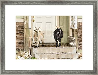 The Goat Guard Framed Print