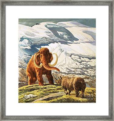 Mammoth Meets Rhinoceros Framed Print by Eric Tansley