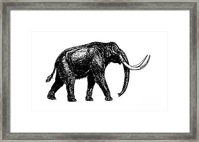 Mammoth Tee Framed Print by Edward Fielding
