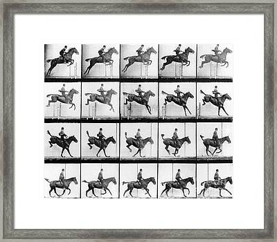 Man And Horse Jumping Framed Print by Eadweard Muybridge