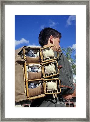 Man Carrying Carrier Pigeons On Back Framed Print