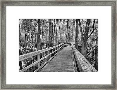 Manatee Springs Black And White Boardwalk Framed Print by Adam Jewell