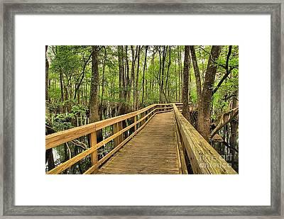 Manatee Springs Boardwalk Framed Print by Adam Jewell