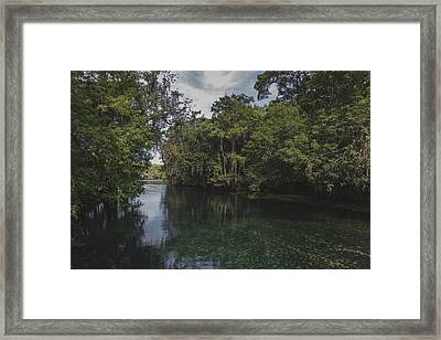 Manatee Springs Framed Print