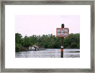 Manatee Zone Framed Print by Steven Scott