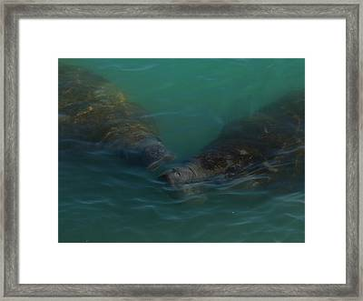Framed Print featuring the photograph Manatees Head For Air by Lynda Dawson-Youngclaus
