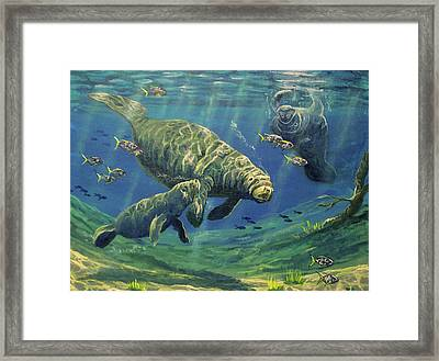 Manatees Framed Print by Marco Antonio Aguilar